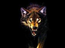 WOLF ^^