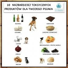 Zakazane produkty dla psa