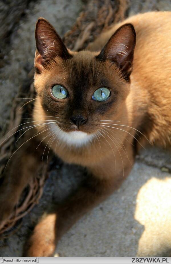 best natural cat food for older cats
