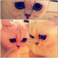 Jakie smutne oczy ma ten kotek...