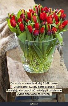 Jak przedłużyć życie kwiatów ciętych?
