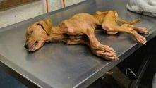 Piękna historia uratowanego psa! Dobro wraca!
