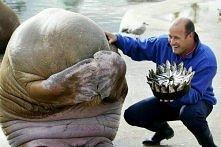 Tort z ryby na urodziny :) Zwierzęta potrafią zaskakiwać.