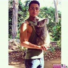 Koala ;p
