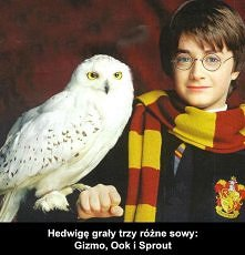 Harry Potter i Kamień Filozoficzny - ciekawostki filmowe ;D