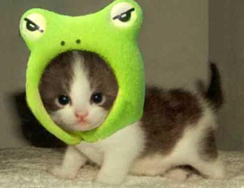 śmieszne Koty Na Humor Zszywka Pl
