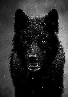 Black *.*