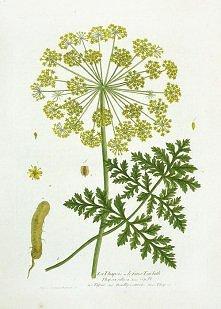 botanika-Nicholas Francois Regnault