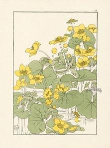Foord Decorative Flower Studies Pochoir Prints 1901
