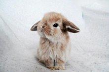 bunny*.*