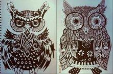 owl .