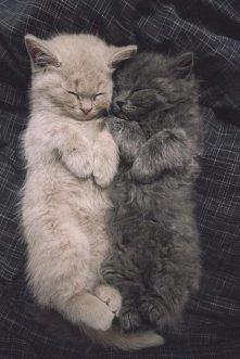 Dobranoc śpiochy. :)