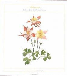 kwiaty-h.p�