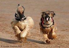 szczęśliwe psy