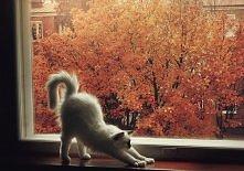 jesiennie <3