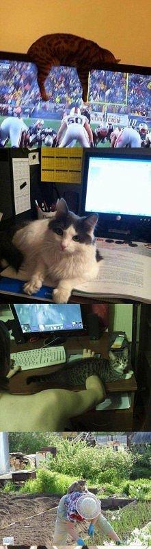 Logika kotów..:D