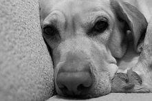 My DOGS SABA :* *.* :D