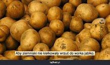 Kiełkujące ziemniaki