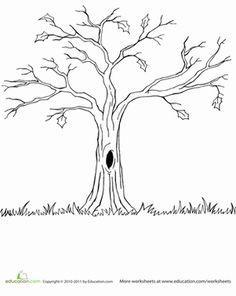 drzewo na SZABLONY I KOLOROWANKI