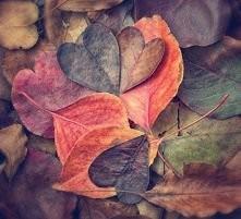 jesień *.*