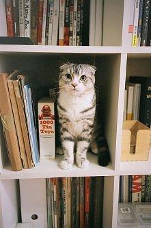 A ku-ku :) Inteligentny kot w bibliotece ;)