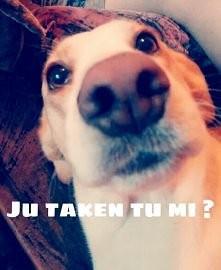 Moja psinka :3