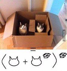 Trochę kociej matematyki =^-^=