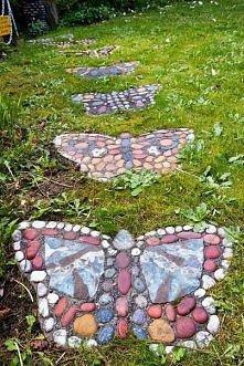 motyle przez cały rok