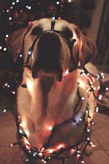 Świąteczne lampki :D