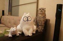 Koty, wszędzie koty.