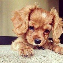 ładny psiak? :)