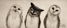 'The Owls Three' by Isaiah Stephens