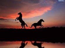My koniarze wiemy jak Galop na nas działa Wiemy jak poruszyć klacz By na jeźd...