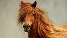Konie to jeden z najważniejszych punktów mojego życia Konie to dla mnie zagadka wciąż nieodkryta