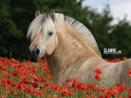Koń Jest Bogiem Galop Nałogiem Kłus Podstawą Skoki Zabawą