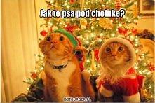 świąteczne koty :)
