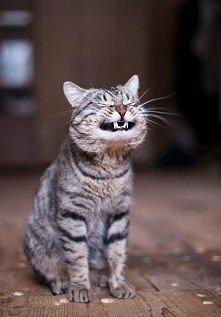 He he he Wasze koty też tak potrafią? :D