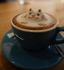 kawowy kotek