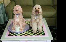 Tort w kształcie psa wraz ze swoim pierwowzorem :D