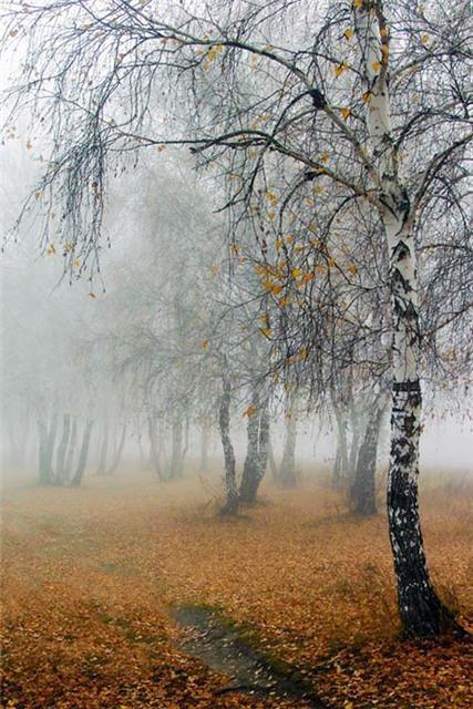 3215-brzozy-otulone-jesienna-mgla.jpg