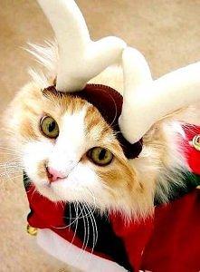 Wesołych świąt.  Mrauuu :)