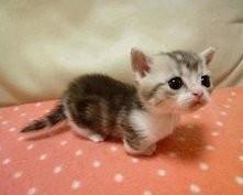 mały kotek... uroczy