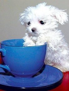 Herbatkę? :D