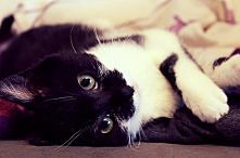 mój kochany kociak <3