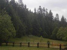 Koninki