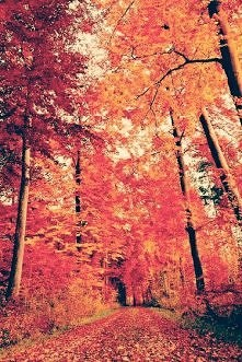 Wymarzona jesień *_*