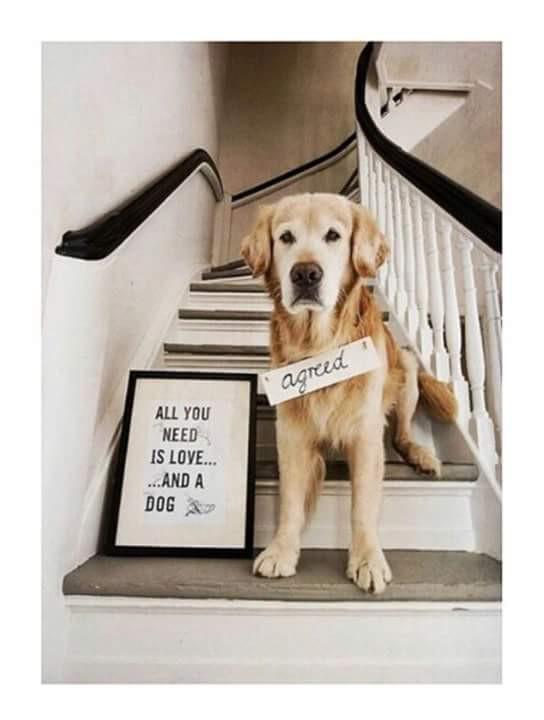 Pies najlepszym przyjacielem człowieka #always