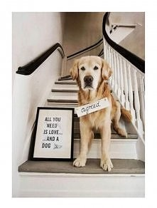 Pies najlepszym przyjaciele...