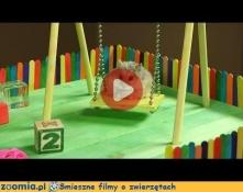 Plac zabaw dla chomiczka Śmieszne Flimy Inne Zoomia.pl