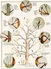 przycinamy drzewa